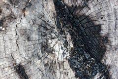 Ξύλινο υπόβαθρο σύστασης Στοκ εικόνες με δικαίωμα ελεύθερης χρήσης