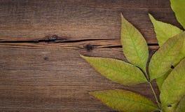 Ξύλινο υπόβαθρο φθινοπώρου με τα φύλλα σφενδάμου Στοκ Εικόνα