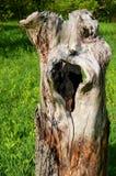 Ξύλινο φάντασμα στοκ εικόνα με δικαίωμα ελεύθερης χρήσης