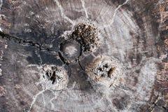 Ξύλινο backgroud Στοκ Εικόνες