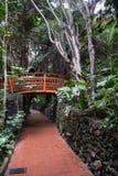 Ξύλινο brinndge στην πράσινη αλέα ζουγκλών στο πάρκο Loro Tenerife στο νησί, Ισπανία Στοκ Εικόνες
