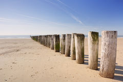 Ξύλινο groyne στην παραλία σε Dishoek στις Κάτω Χώρες Στοκ φωτογραφία με δικαίωμα ελεύθερης χρήσης