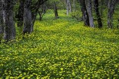 Ξύλο άνοιξη με τα λουλούδια στην Κριμαία Στοκ εικόνα με δικαίωμα ελεύθερης χρήσης