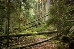 Ξύλο/δάσος Στοκ φωτογραφία με δικαίωμα ελεύθερης χρήσης