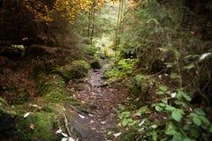 Ξύλο/δάσος Στοκ εικόνες με δικαίωμα ελεύθερης χρήσης