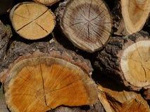 Ξύλο Ένας κορμός Στοκ φωτογραφία με δικαίωμα ελεύθερης χρήσης