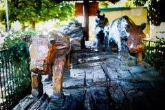 Ξύλο βοδιών Στοκ φωτογραφία με δικαίωμα ελεύθερης χρήσης