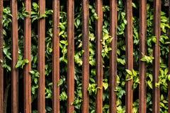 Ξύλο και δέντρο για το υπόβαθρο φρακτών Στοκ Φωτογραφία