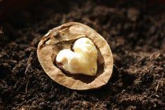 Ξύλο καρυδιάς βαλεντίνων s στοκ φωτογραφία με δικαίωμα ελεύθερης χρήσης