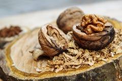 Ξύλο καρυδιάς και γλυκάνισο Στοκ εικόνες με δικαίωμα ελεύθερης χρήσης