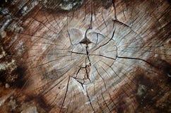 Ξύλο καρδιών Στοκ εικόνα με δικαίωμα ελεύθερης χρήσης