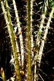 Ξύλο με τα αγκάθια Στοκ φωτογραφία με δικαίωμα ελεύθερης χρήσης