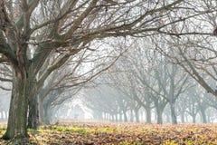 Ξύλο ξύλων καρυδιάς Στοκ φωτογραφία με δικαίωμα ελεύθερης χρήσης