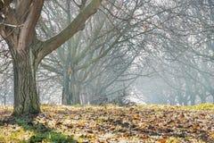 Ξύλο ξύλων καρυδιάς Στοκ Φωτογραφία