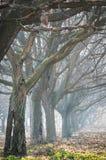 Ξύλο ξύλων καρυδιάς Στοκ εικόνες με δικαίωμα ελεύθερης χρήσης