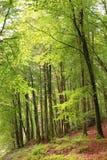 Ξύλο οξιών Dartmoor Στοκ εικόνα με δικαίωμα ελεύθερης χρήσης