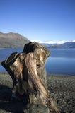 Ξύλο περικοπών στην ακτή λιμνών Στοκ εικόνα με δικαίωμα ελεύθερης χρήσης