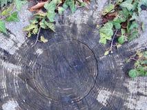 Ξύλο που σπάζουν με τον κισσό Στοκ εικόνα με δικαίωμα ελεύθερης χρήσης