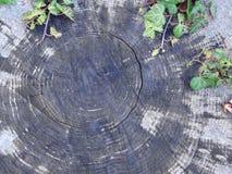 Ξύλο που σπάζουν με τον κισσό Στοκ φωτογραφίες με δικαίωμα ελεύθερης χρήσης