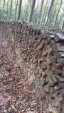 Ξύλο στο δάσος Στοκ φωτογραφία με δικαίωμα ελεύθερης χρήσης