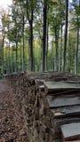 Ξύλο στο δάσος Στοκ εικόνα με δικαίωμα ελεύθερης χρήσης