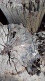 Ξύλο σύστασης υποβάθρου oldwood moldy Στοκ Εικόνα