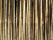 ξύλο του μπαμπού στοκ φωτογραφία