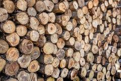 ξύλο φωτογραφικών διαφανειών στην αποθήκη εμπορευμάτων Στοκ εικόνες με δικαίωμα ελεύθερης χρήσης