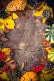 Ξύλο φύσης δώρων υποβάθρου φθινοπώρου Στοκ εικόνες με δικαίωμα ελεύθερης χρήσης