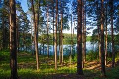 Ξύλο Στοκ φωτογραφίες με δικαίωμα ελεύθερης χρήσης