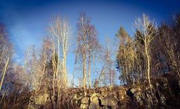 Ξύλο Στοκ Φωτογραφίες