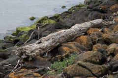 Ξύλο Drft σε μια σκορπισμένη λίθος παραλία Στοκ φωτογραφίες με δικαίωμα ελεύθερης χρήσης
