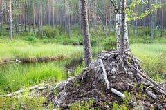 Οίκημα κάστορα Στοκ Εικόνα