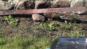 Οβελίδιο Shashlik και εστία πετρών με την αργή καύση ξύλινη 4K φιλμ μικρού μήκους