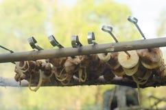 Οβελίδια στη φύση Στοκ Εικόνα