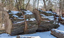 Ογκώδες δέντρο Στοκ Φωτογραφία