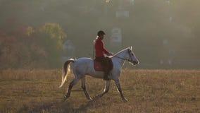 Οδήγηση ενός αλόγου πέρα από έναν τομέα γύρω από έναν κατοικημένο τομέα με τα σπίτια κίνηση αργή απόθεμα βίντεο