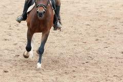 Οδήγηση πλατών αλόγου εκμάθησης Διδάσκει τον ιππικό αθλητισμό Στοκ φωτογραφίες με δικαίωμα ελεύθερης χρήσης