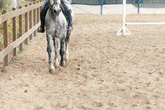 Οδήγηση πλατών αλόγου εκμάθησης Ο εκπαιδευτικός διδάσκει τον έφηβο ιππικό Στοκ φωτογραφίες με δικαίωμα ελεύθερης χρήσης