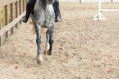 Οδήγηση πλατών αλόγου εκμάθησης Ο εκπαιδευτικός διδάσκει τον έφηβο ιππικό Στοκ φωτογραφία με δικαίωμα ελεύθερης χρήσης