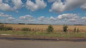 Οδήγηση στο δρόμο κατά μήκος του τομέα καλαμποκιού φθινοπώρου φιλμ μικρού μήκους