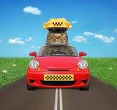 Οδηγός γατών στο δρόμο στοκ φωτογραφία με δικαίωμα ελεύθερης χρήσης