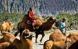 Οδηγώντας καμήλα Στοκ εικόνα με δικαίωμα ελεύθερης χρήσης