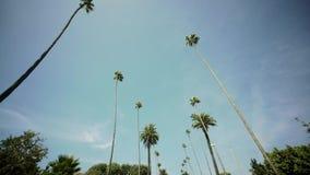 Οδηγώντας μέσω των φοινίκων στη Beverly Drive, μπλε ουρανός, ευρύς πυροβολισμός λόφοι της Beverly απόθεμα βίντεο