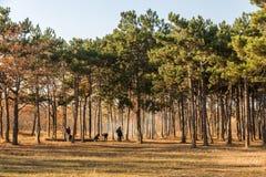Οδησσός, Ουκρανία CIRKA 2018: Φωτιά forest Company, οικογένεια α στοκ εικόνες με δικαίωμα ελεύθερης χρήσης