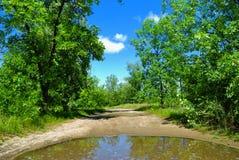 οδικά δέντρα βροχής λακκ&omic Στοκ Εικόνες