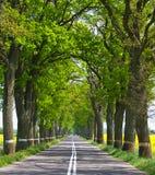 οδικά δέντρα γραμμών Στοκ φωτογραφία με δικαίωμα ελεύθερης χρήσης