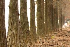 οδικά δέντρα πτώσης Στοκ φωτογραφία με δικαίωμα ελεύθερης χρήσης