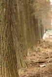 οδικά δέντρα πτώσης Στοκ Εικόνες