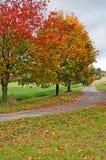 οδικά δέντρα φθινοπώρου Στοκ Εικόνα